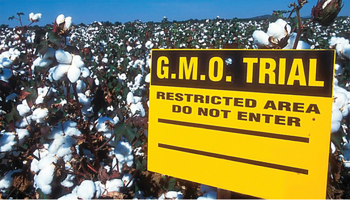 New GMO testing by OEKOTEX for organic cotton