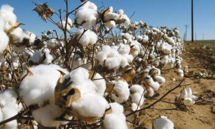Turkey likely to hike duties on imports of American cotton