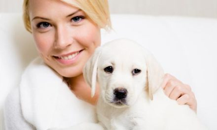 Devan launches technology to make textiles free from pet allergens