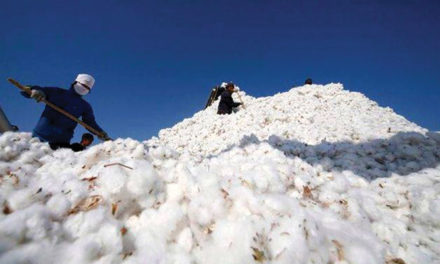 India's cotton exports to China may witness a 5-fold jump