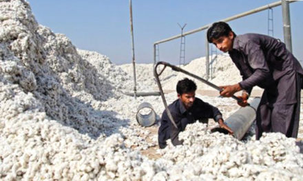 Pakistan's cotton output likely to fall 25 per cent
