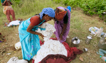 India's cotton productivity at lowest in a decade