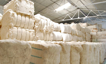 World cotton trade and stocks higher in 2019-20