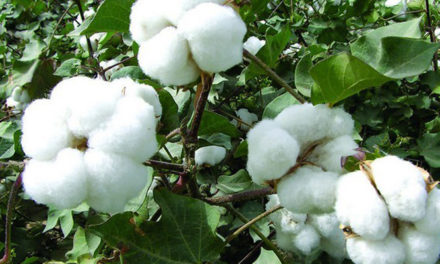 MoU to promote naturally-coloured cotton in Maharashtra