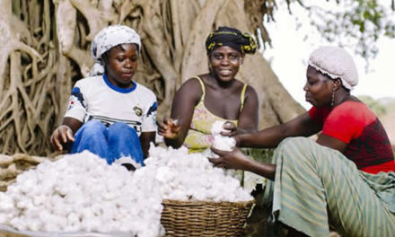 450,000-metric tonne of cotton to be produced in Nigeria