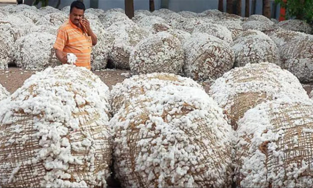 Cotton imports still high in India
