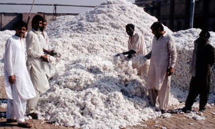 Reduction in cotton arrival at ginneries in Pakistan