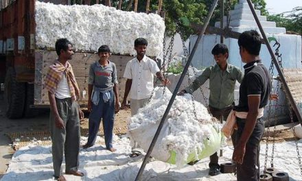 Cotton prices forecast to fall in 2019/20 and 2020/21